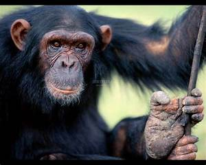 Animals Pictures  Monkeys