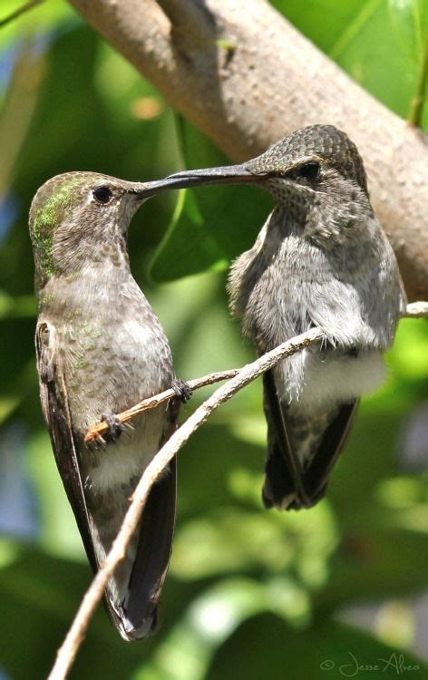 1000 images about birds photographs on pinterest love