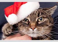 Die 10 besten Weihnachtsgeschenke für Ihre Katze