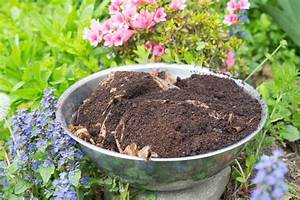 how to use coffee grounds in your garden gardenoholic