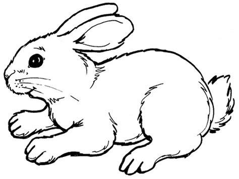 rabbit drawing outline  getdrawings