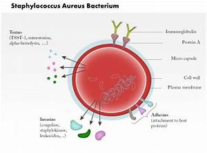 0814 Staphylococcus Aureus Bacterium Medical Images For