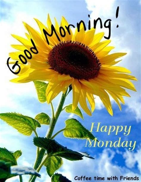 Morning Happy Monday Images Morning Happy Monday Pictures Photos And Images For