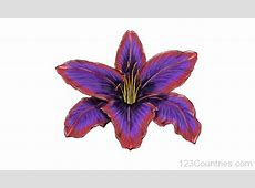 Italy National Flower Lily 123Countriescom
