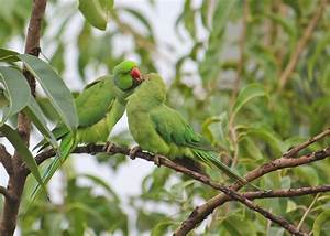 40 Beautiful love birds wallpapers | Inspire Information