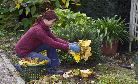 Tipps Für Den Garten Im Herbst by 10 Tipps Rund Um Den Herbstputz Im Garten Herbst