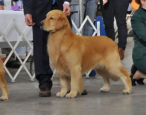 midstate residents to have strong showing at westminster With show me dog kennels