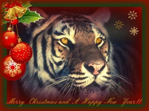tiger christmas great cats of the quot world quot