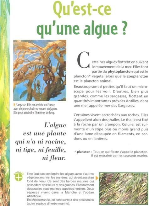qu est ce qu une le qu est ce qu une algue