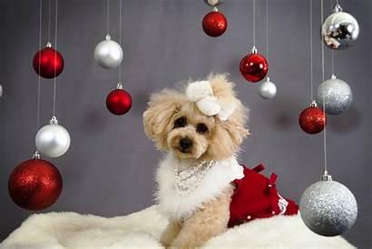 Christmas Dog Wallpapers Xmas