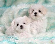 Cute Baby Dogs Puppies