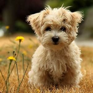 Animals Zoo Park 8 Cute Puppies Wallpapers Puppy