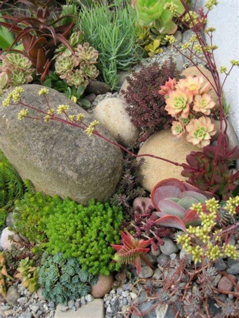 some photos of my succulent rock garden cacti