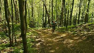 Man Running Away In The Woods Stock Footage Video 3144424 ...