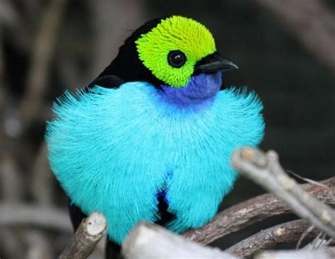 Beautiful Birds Picture - We Need Fun