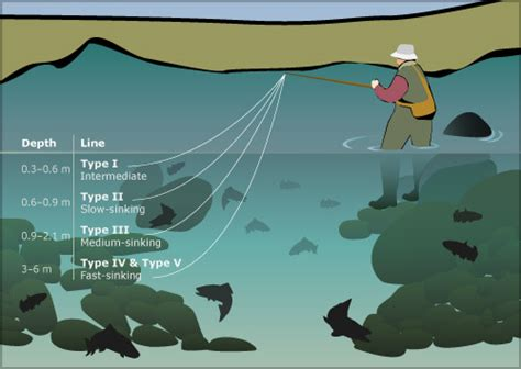 sinking fly lines freshwater fishing te ara