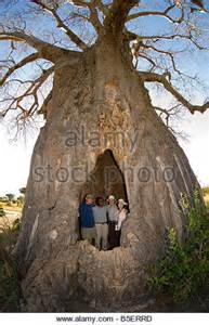 Baobab Trees Tanzania Africa