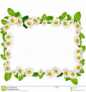 Daisy Images Frames Clipart