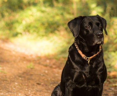 traegheit uebergewicht und epilepsie beim hund paco