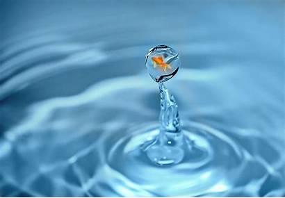 Water Fish Ice Drop Surreal Drip Swim