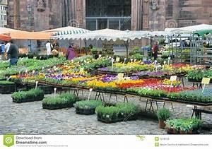 Markt De Freiburg Breisgau : blumen markt stockfoto bild von outdoor landwirte bunt 1218124 ~ Orissabook.com Haus und Dekorationen