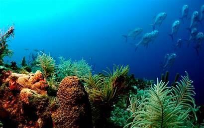 Underwater Ocean Fish Wallpapers Amazing Pixelstalk