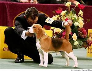 are dog shows hurting dogs sfgate With show me dog kennels