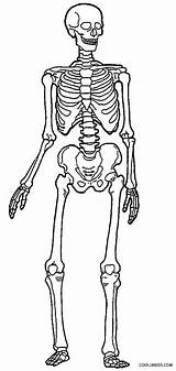 Skeleton Coloring Human Pages Skeletons Anatomy Printable Bones Drawing Sheets Simple Cool2bkids Skeletal System Sketch Getdrawings Skull Halloween Ribs Printables sketch template