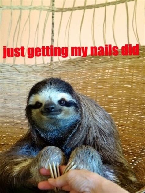 Pervy Sloth Meme - the 25 best sloth memes ideas on pinterest sloth humor sloths and baby sloth