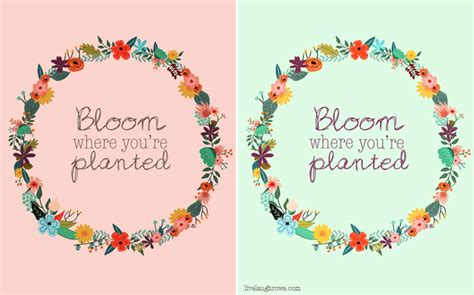 Free svg, eps, dxf & png files. Bloom Where You're Planted Printable - Live Laugh Rowe