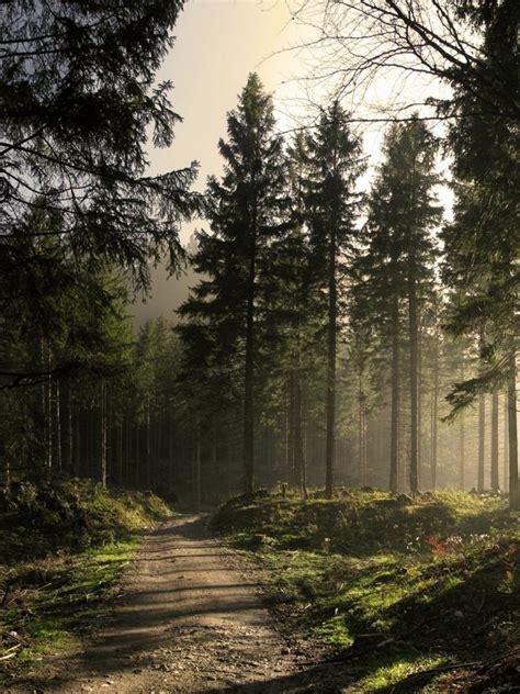 hdwallpaperscom  sunny forest road desktop