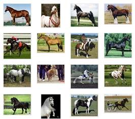 Different Horse Breeds with Names