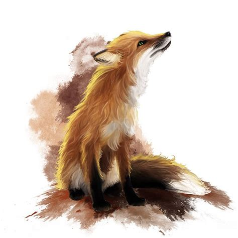 ideas  fox illustration  pinterest fox