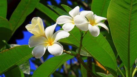 exotic flowers A13 - HD Desktop Wallpapers | 4k HD