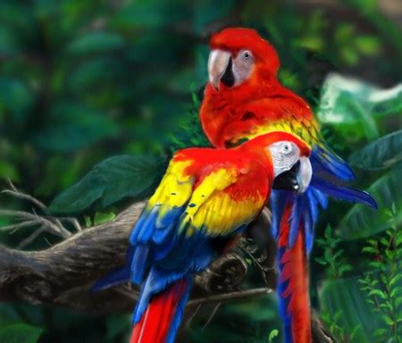scarlet macaw birds animals background wallpapers