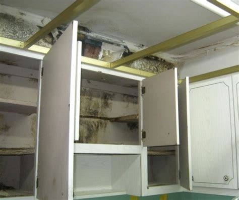 black mold in kitchen cabinets mold remediation costs diy vs using a professional 7893