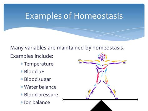Homeostasis August 11, Ppt Video Online Download