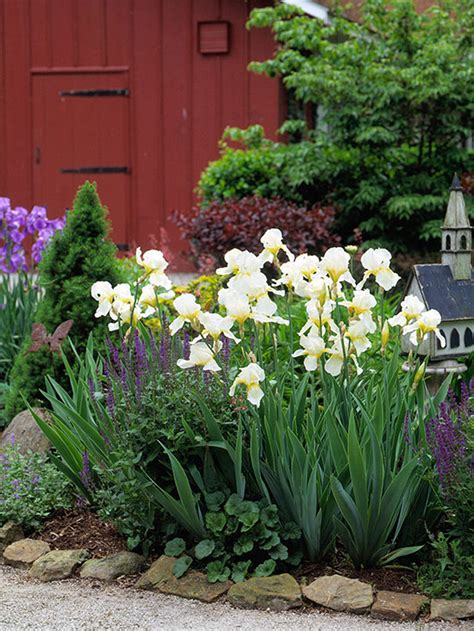 how to plant iris bulbs how to plant iris bulbs www pixshark com images galleries with a bite