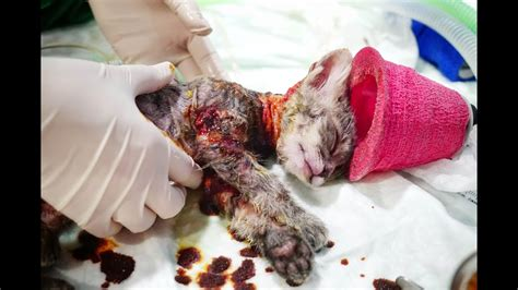 update abused kitten boiled alive update chico fights