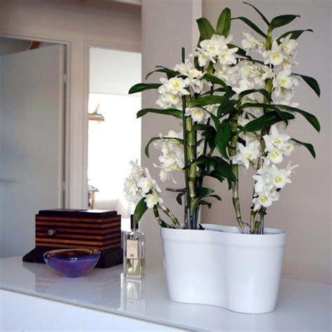 ideas  entretien des orchidees  pinterest