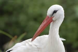 santa gift list white stork twycross zoo