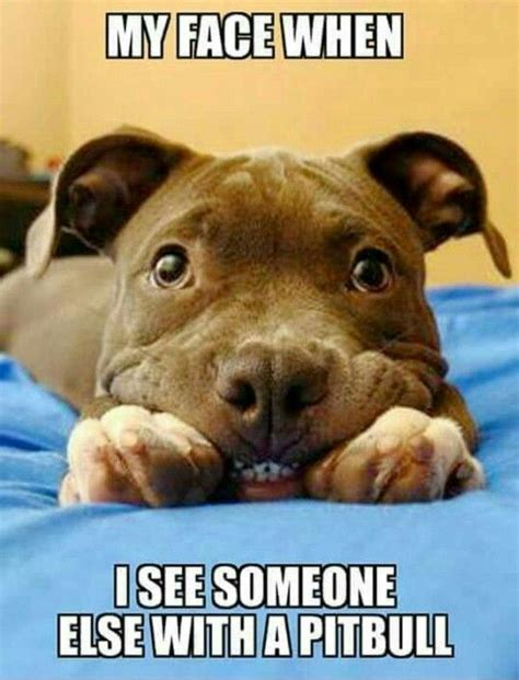 Pitbull Puppy Meme - 1852 best images about for the love of pitbulls on pinterest