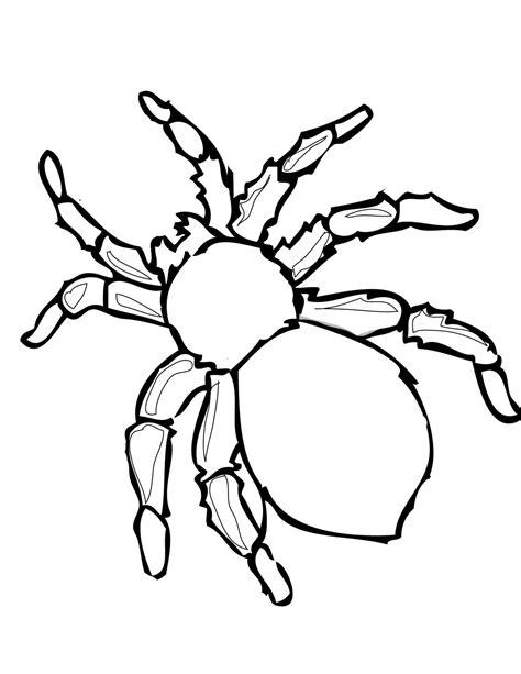 Redback Spider Coloring Download Redback Spider Coloring