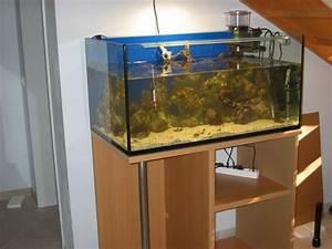 Aquarium Unterschrank Ikea : korallenriff und s sswasseraquarium das sch nste hobby der welt ~ A.2002-acura-tl-radio.info Haus und Dekorationen