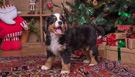 how to keep dog away from christmas tree this holiday season