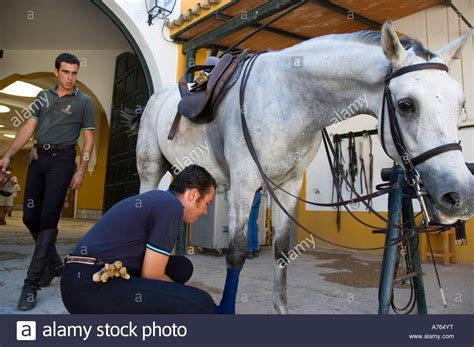 jerez andalusian horse equestrian royal frontera alamy