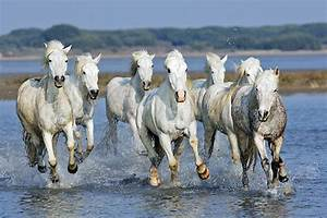 camargue - Animal Stock Photos - Kimballstock