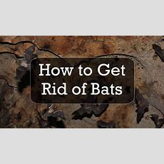How To Get Rid Of Bats Youtube