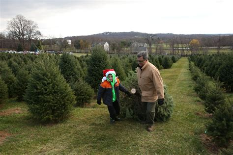 our day at the snickers gap christmas tree farm dc refined