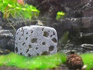 Aquarium Deko Steine : nano aquarium deko so wird ihr aquarium erst interessant ~ Frokenaadalensverden.com Haus und Dekorationen